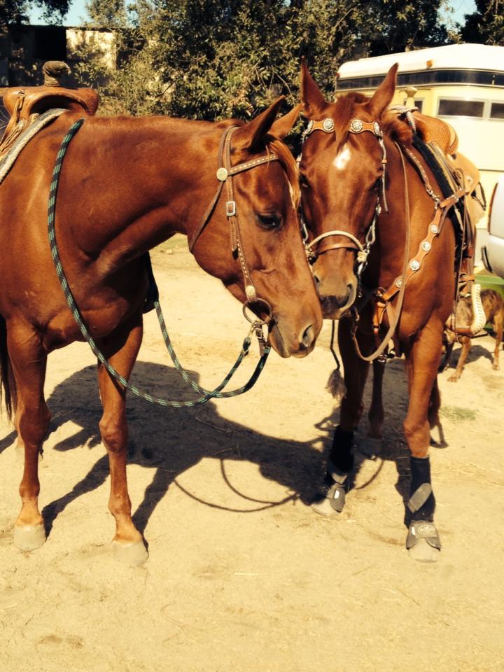 environmentally friendly horse fly spray