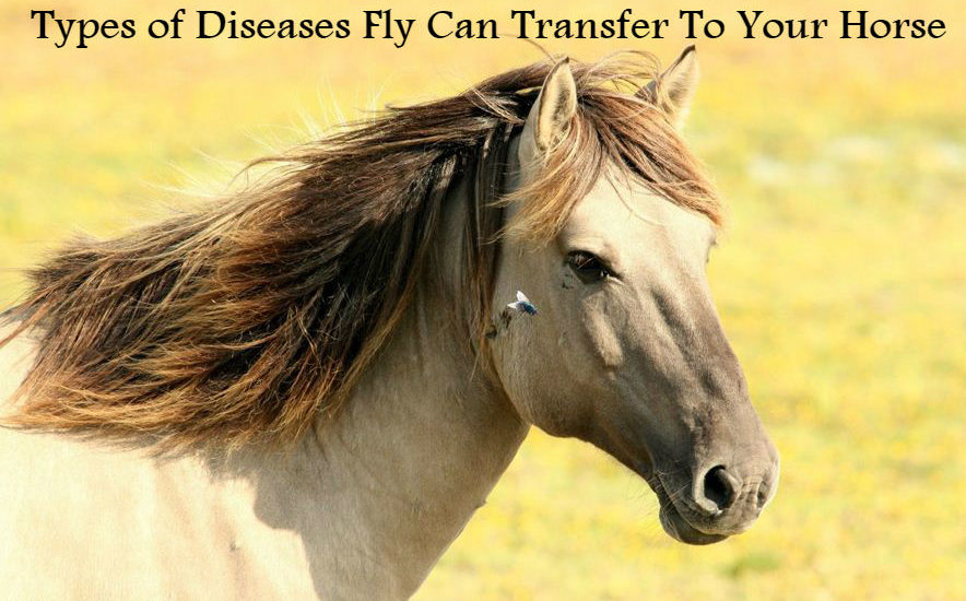 Types of Diseases Fly Can Transfer To Your Horse