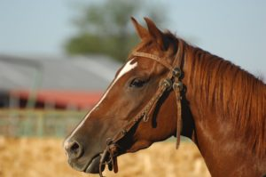 Horse Fly Repellent