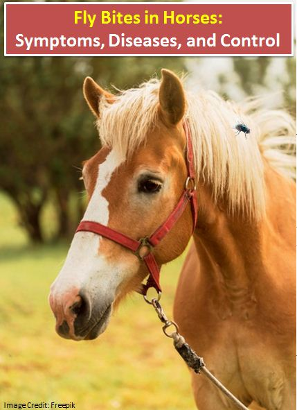 Fly Bites in Horses: Symptoms, Diseases, and Control