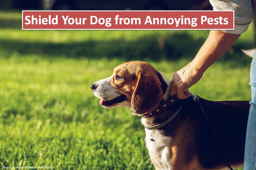 Shield Your Dog from Annoying Pests