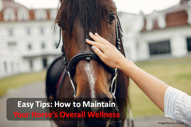 Easy Tips: How to Maintain Your Horse's Overall Wellness