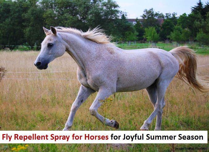 Fly Repellent Spray for Horses for Joyful Summer Season