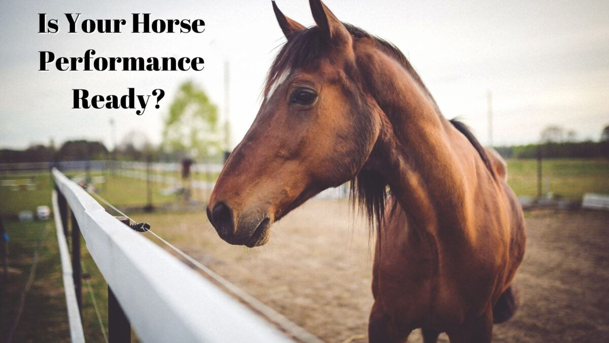 Is Your Horse Performance Ready?