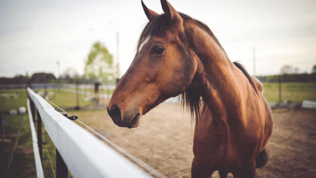 Horse Fly Spray
