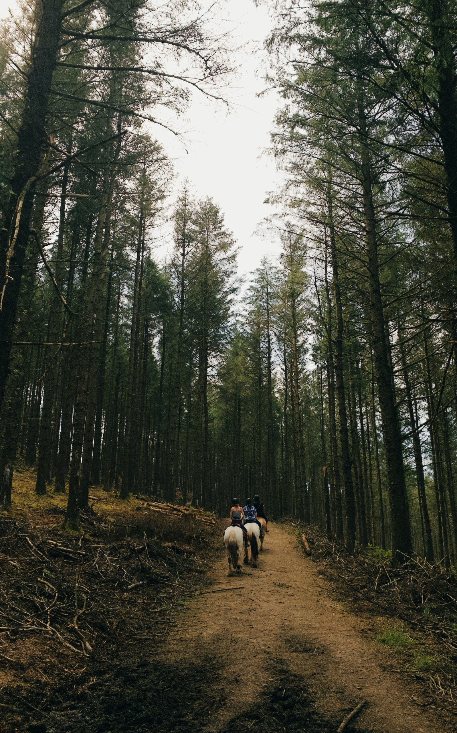 Tips for trail riding during hunting season